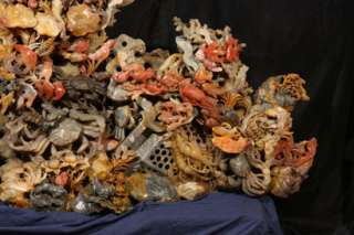 CARVED CORAL REEF FISHES CRABS CORAL SHRIMP CLAMS FISH TRAP