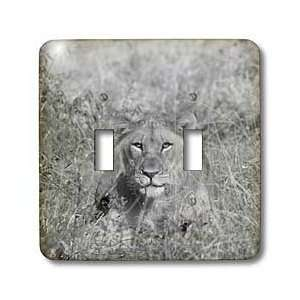 Angelique Cajam Big Cat Safari   Young lion head in the grass   Light