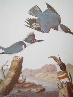 Audubon Best Loved Bird Prints  Belted Kingfisher