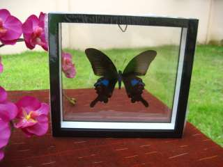 THE BLUE PARIS Butterfly Double Glass Black Frame