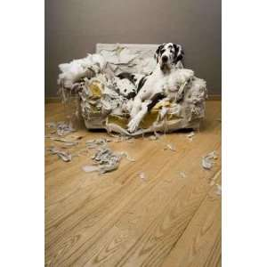Gentil Le Chienchien   Peel and Stick Wall Decal by