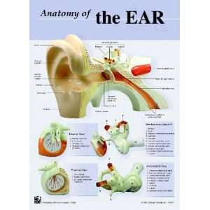 Human Ear Anatomy Charts Notebook Size Poster;Pk/10