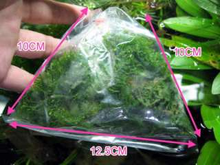 TAIWAN Moss 3 BAG  live aquarium plant Decoration fern