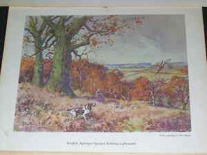 LARGE ANTIQUE ENGLISH SPRINGER SPANIEL DOG PICTURE 1956