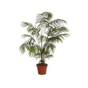 Areca Artificial Silk Palm Tree Plant 6 Home & Kitchen